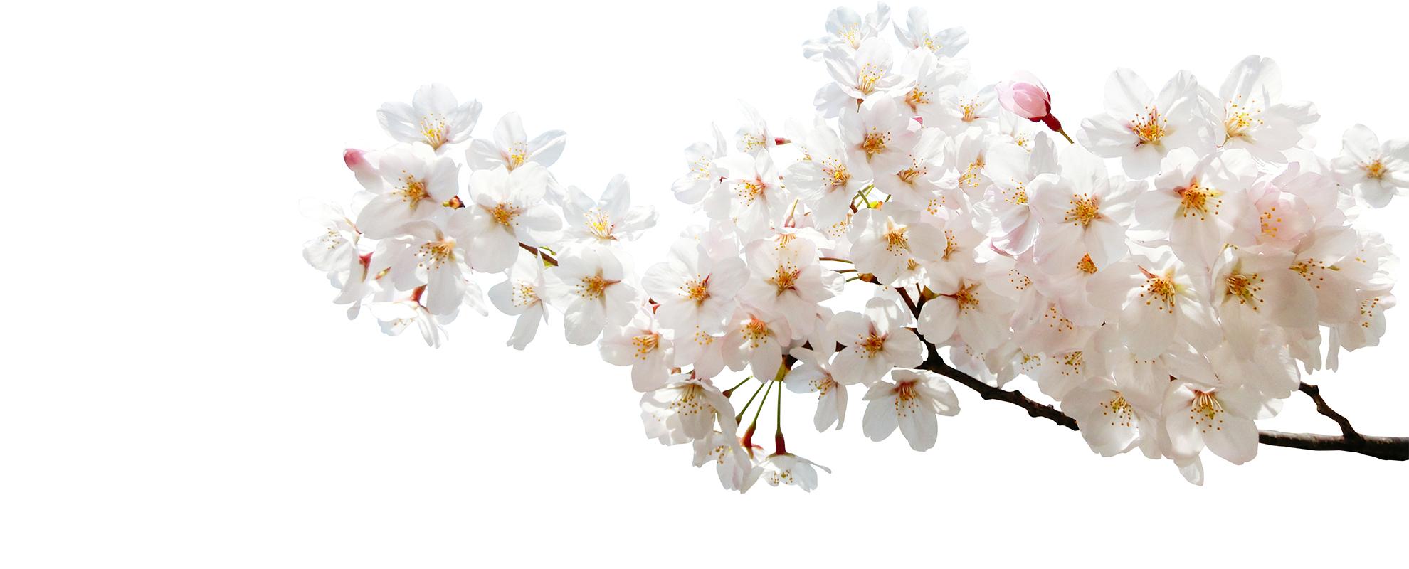 ホワイトデー&新しい季節を彩る「春の贈り物」